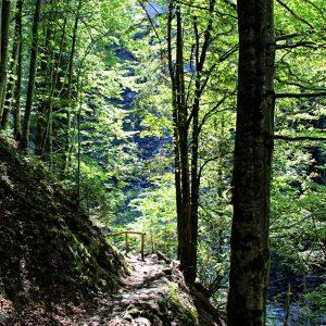 Durch den Wald Nebelhorn