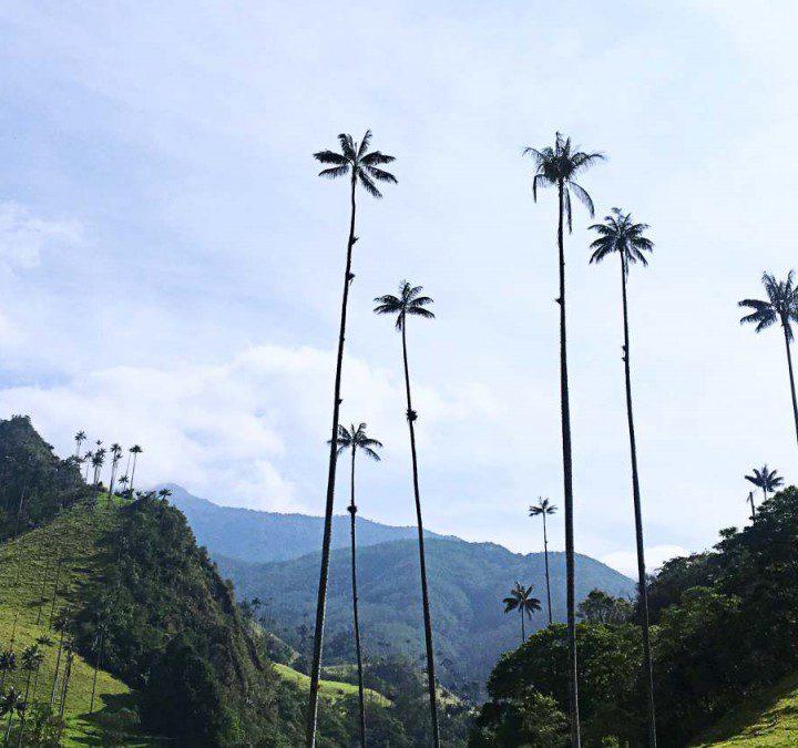Kolumbien: Von Medellin nach Salento – Highlights und die besten Erlebnisse