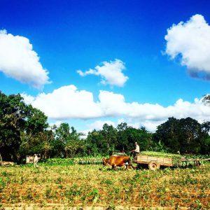 Vinales Tabakfarm