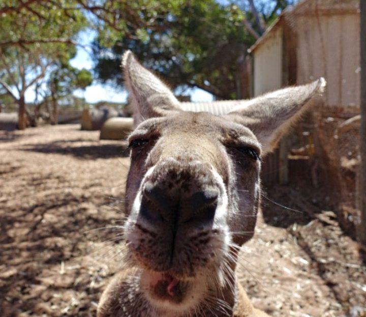 Follow the Sun! Crazy Gruppentour Westküste Australien: von Perth nach Exmouth.
