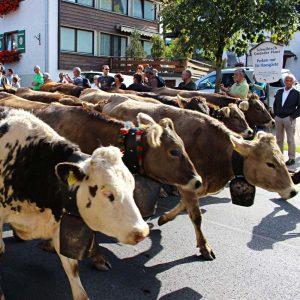 Viehscheid in Riezern