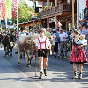 Viehscheid Ankunft